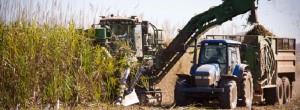 Banner-Harvesting