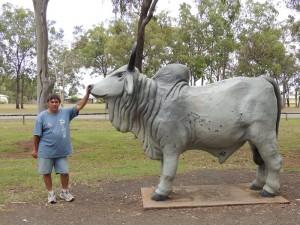 Bull Mareeba