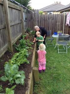 Planting Lettuces