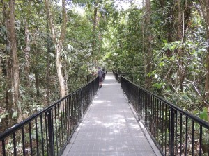 Mossman Gorge Walkways