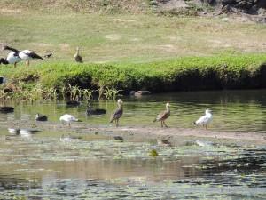 Goose ponds 2
