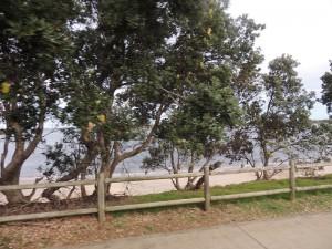 Coast Byron Bay to Ballina 3