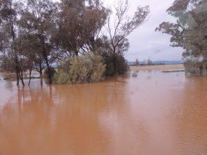Flooding Dubbo 2