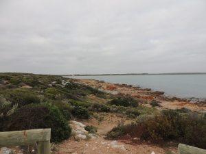 Wattlebee Reserve 4